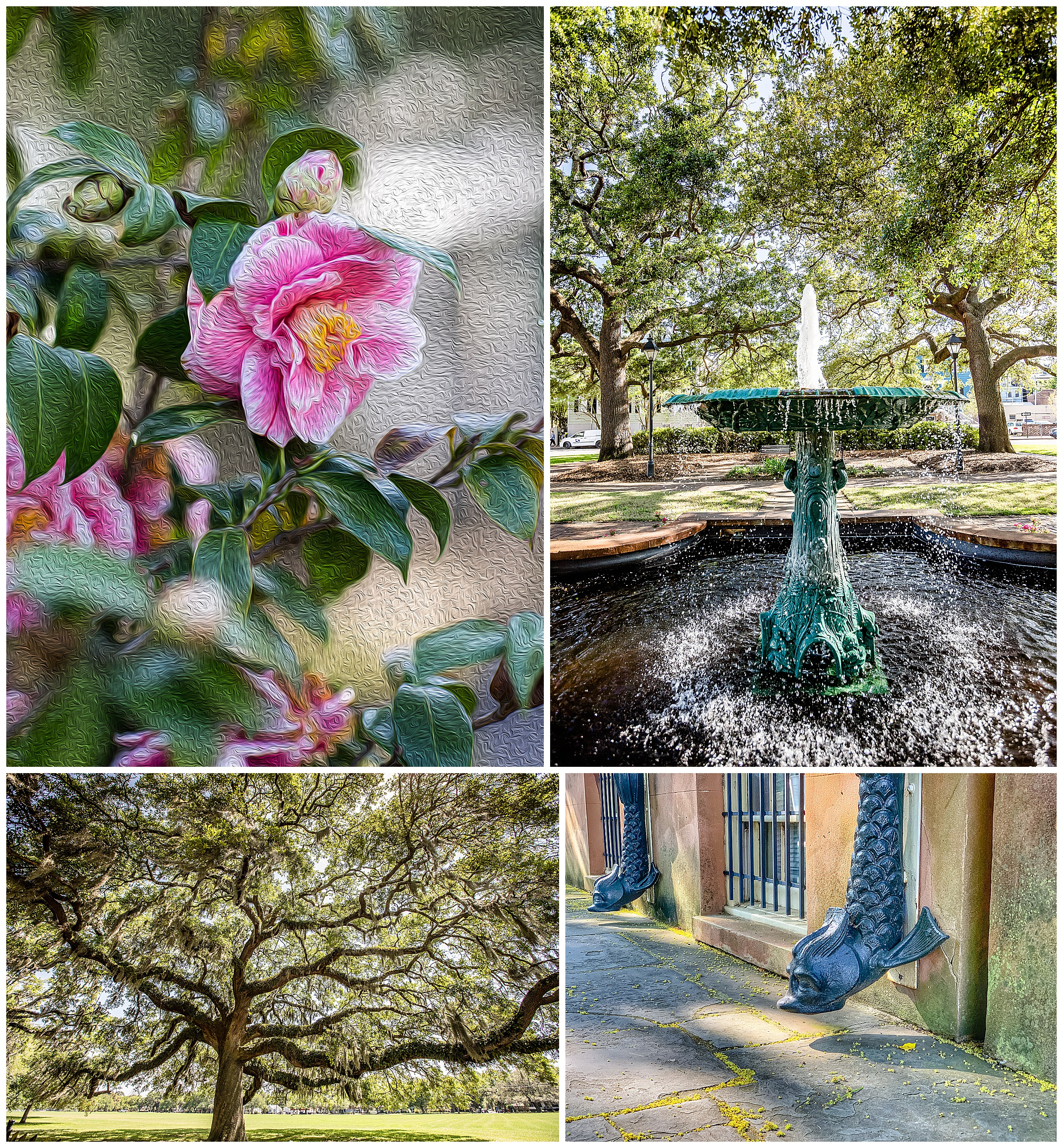 camellia crop 4x6-1.jpg